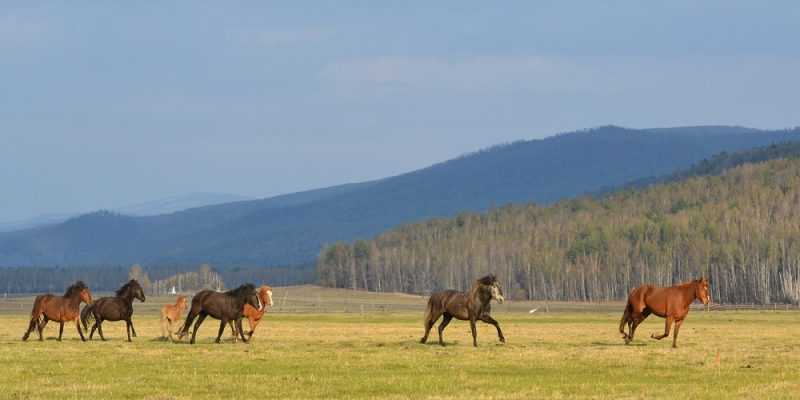 Buryatia will get 143000$ for ecological trails